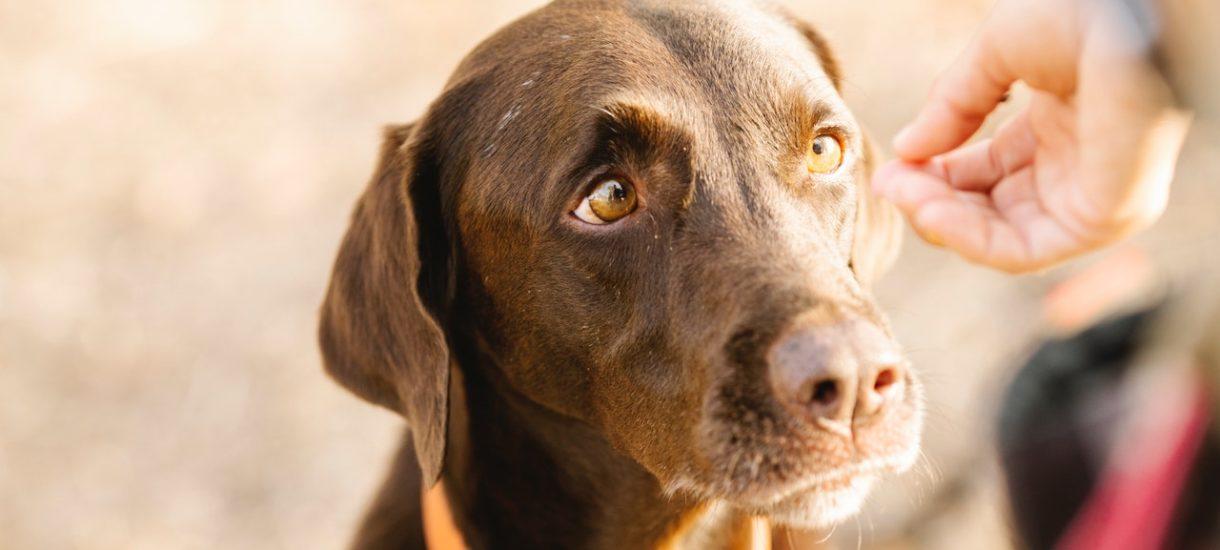Więzienie i kara finansowa za porzucenie psa, gdy jedziemy na wakacje. Ustawodawca niestety nie wspomina nic o torturach