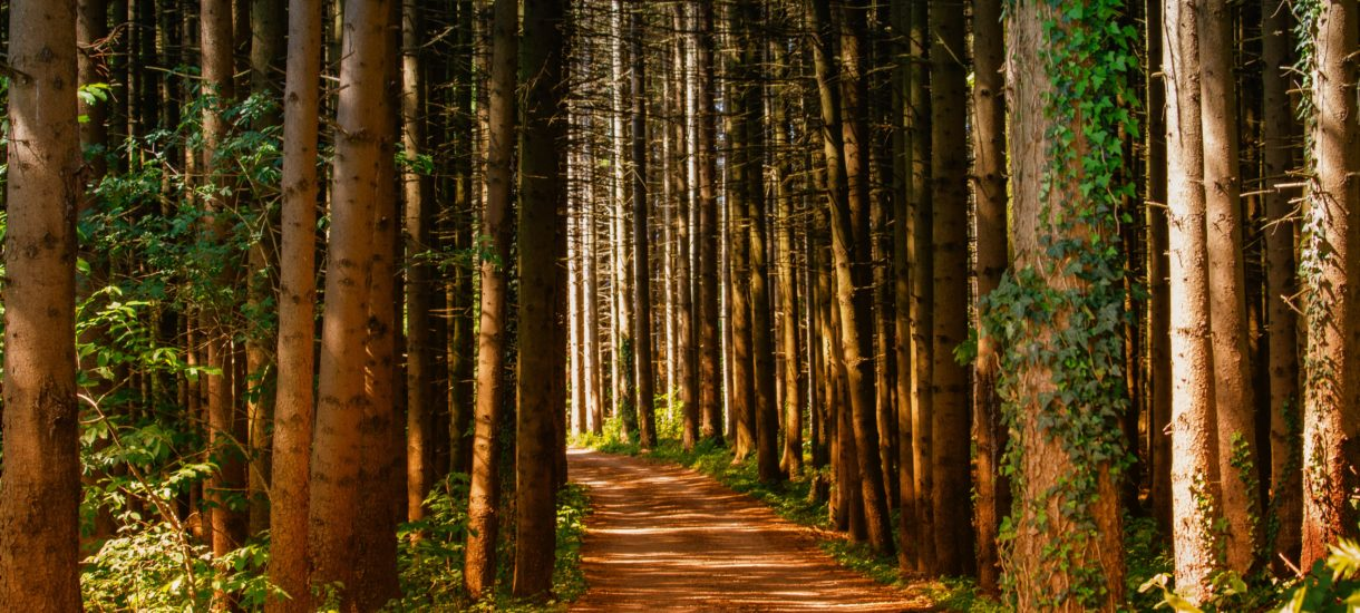 Rząd rozważa utworzenie agencji, która zarządzałaby wszystkimi parkami narodowymi w Polsce