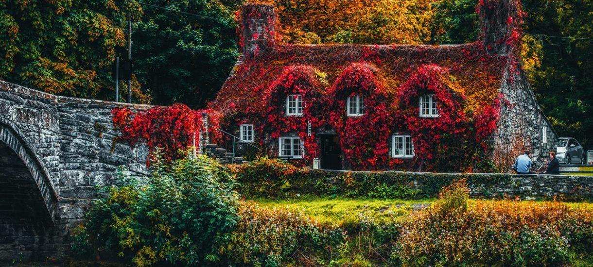 Masz zielony dach albo ścianę roślin? Możesz być zwolniony z podatku od nieruchomości