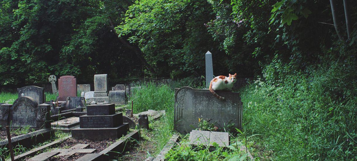 Rząd walczy z problemem mieszkaniowym jak może. Do Sejmu trafił projekt ustawy pozwalający na budowanie bliżej cmentarza