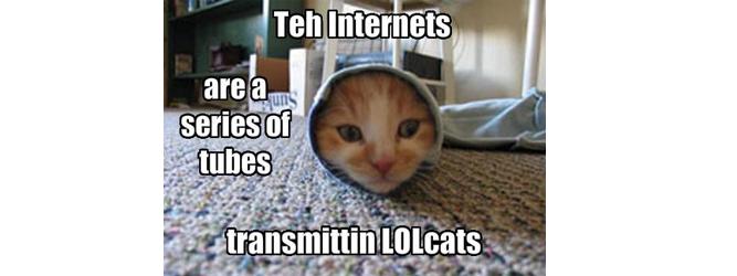 Koty rządzą internetem. Światem. Czcionkami też