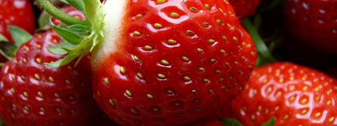Najcieplejsza zima w Europie od 250 lat. We Włoszech rozpoczynają się zbiory truskawek, bobu i szparagów
