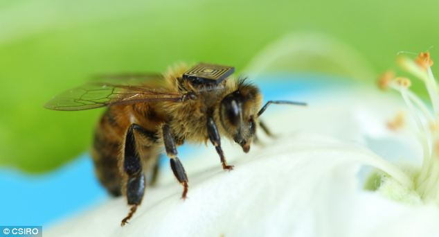 Naukowcy robią co mogą, aby uratować pszczoły, które są odpowiedzialne nawet za 33 proc. naszego pożywienia