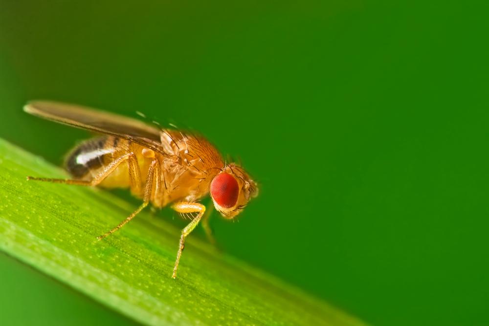Eksperyment z owadami może być dowodem na to, że człowiek nie jest stworzony do podróży kosmicznych