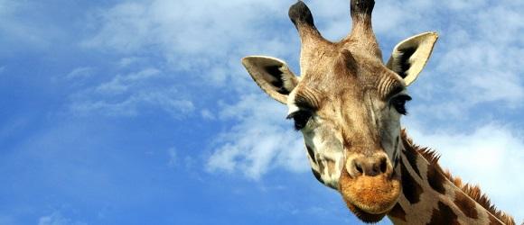 Dzieci w Polsce będą płacić za zakupy zbliżeniowymi… żyrafami