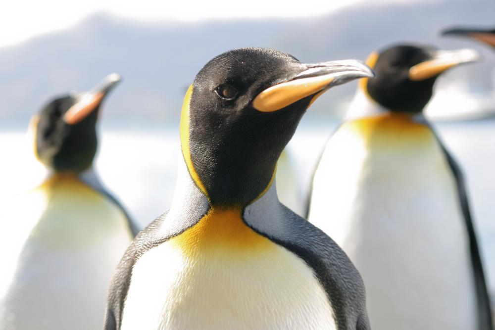 Krytyczna luka w systemach Linux jest już wykorzystywana przez cyberprzestępców