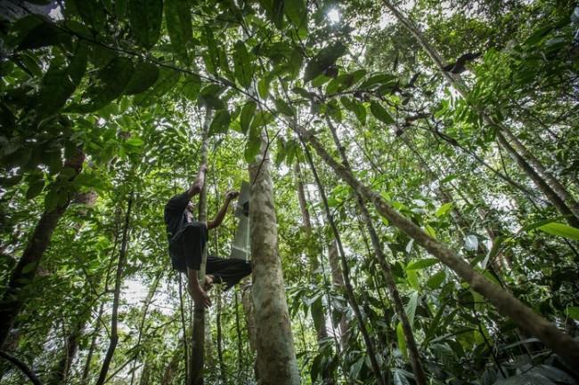 rainforest-connection-rfcx