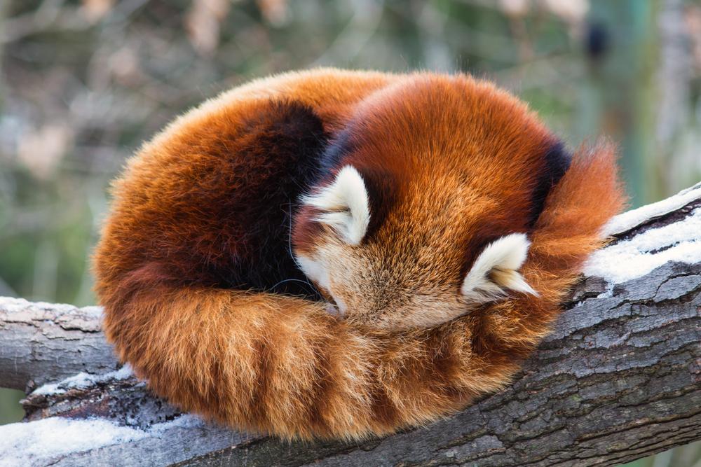 Oto i on – nowy Firefox bez wyszukiwarki Google, za to z wbudowanym komunikatorem