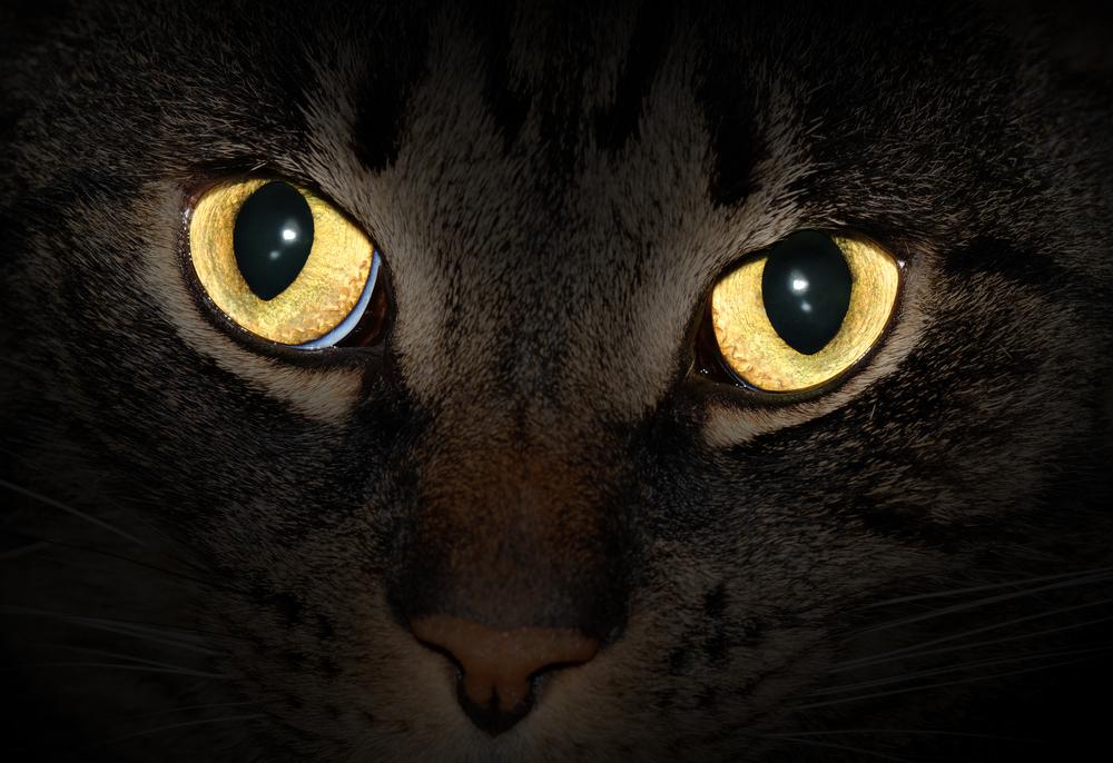 Zmieniające kolor koty, czyli jak wysłać wiadomość 10 tysięcy lat w przyszłość?