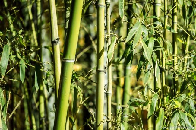 Chiny rusztowanie bambus (1 of 1)