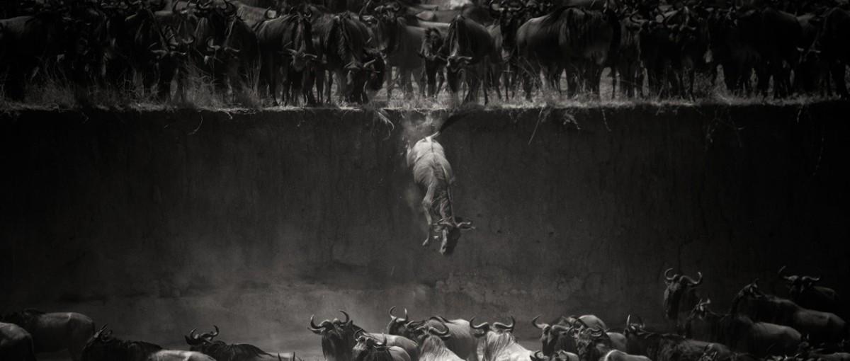 Zwycięskie zdjęcia National Geographic Photo Contest 2014 – porcja świetnej fotografii