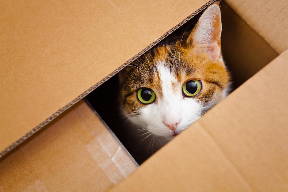 Dlaczego właściwie koty uwielbiają pudełka