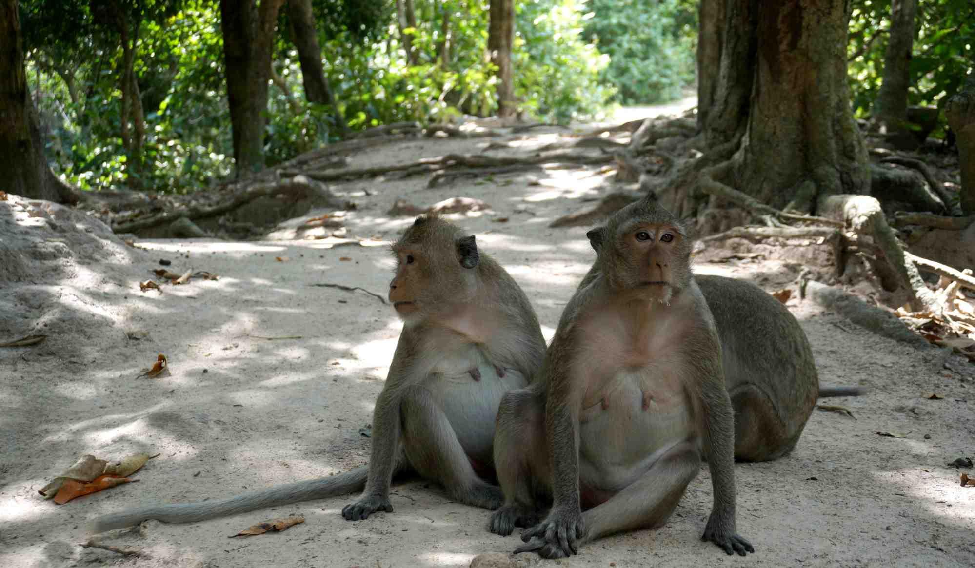 Odwiedziłem jedno z najlepszych zoo na świecie. W Kambodży