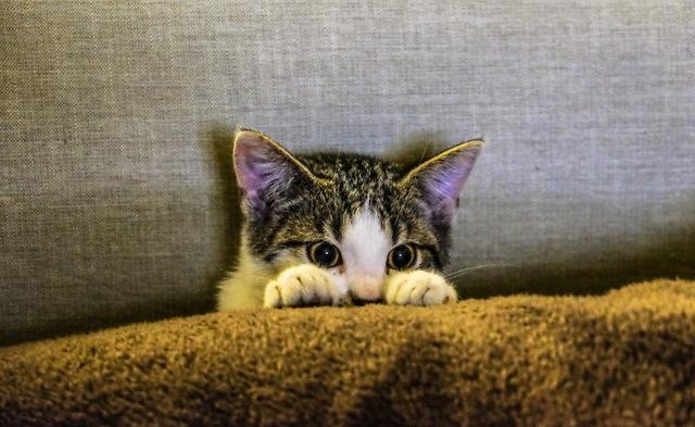 Podsłuchiwani przez cyber-kota
