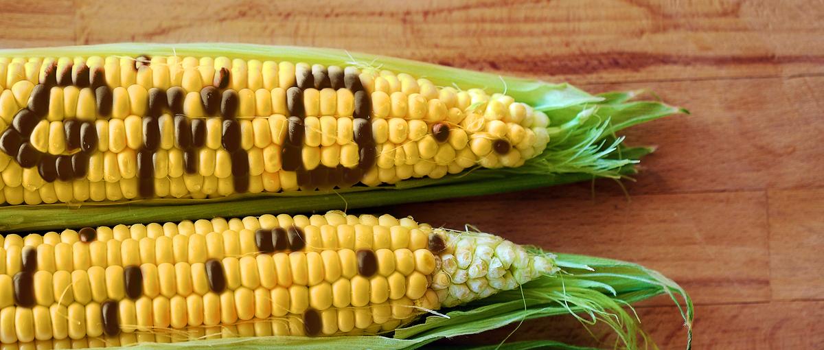 Przeciwnicy GMO są jak antyszczepionkowcy