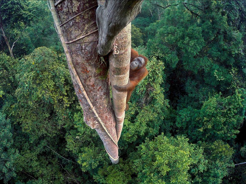 Najlepsze zdjęcie dzikiej przyrody wykonano kamerką… GoPro. Oto ono i inne równie dobre