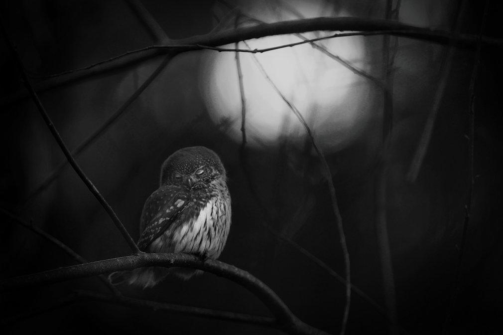 wildlife-photographer-of-the-year-03