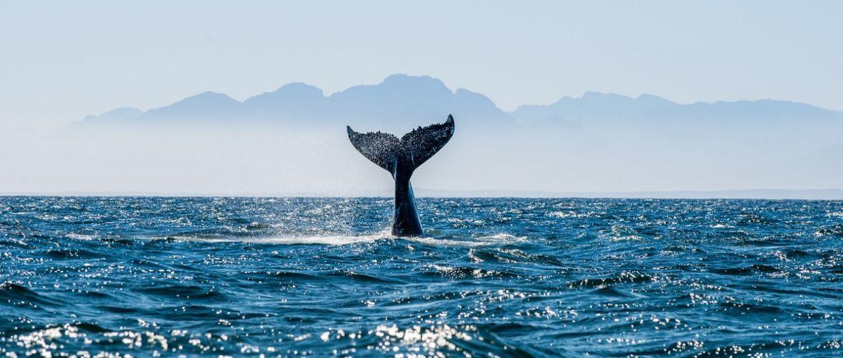 Jeśli Niebieski Wieloryb rzeczywiście kogoś zabije, to krew na rękach będą mieli dziennikarze