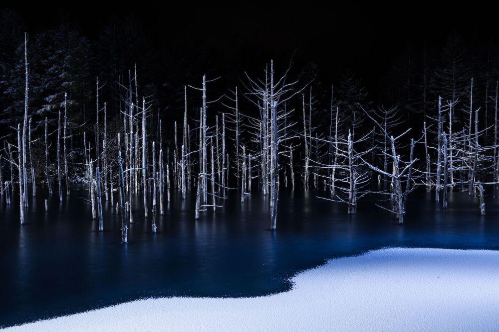 Natura — Hiroshi Tanita (Japonia)