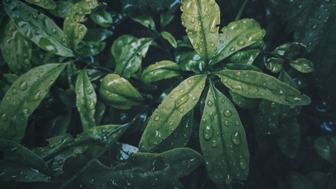 W betonowej dżungli chwila spokoju w zieleni – złapane smartfonem #92