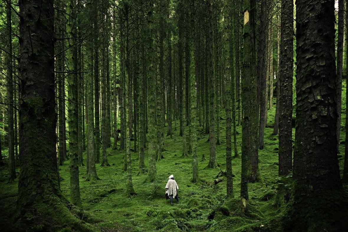 Teorie spiskowe: Oni rządzą światem, czyli Bohemian Grove