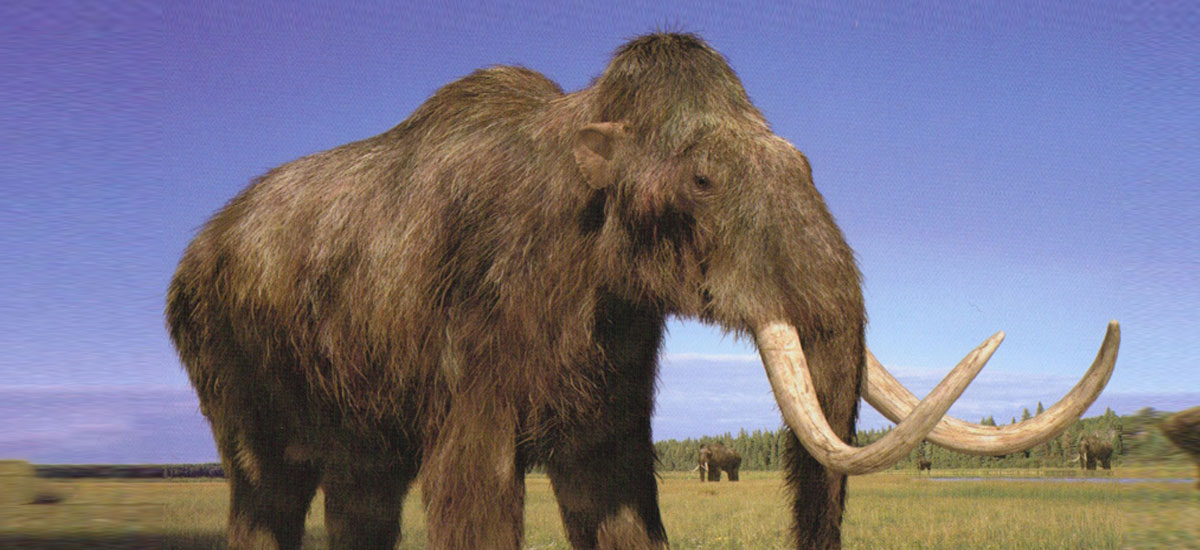 We are approaching the first resurrection of the mammoth. Sultry elephants with help