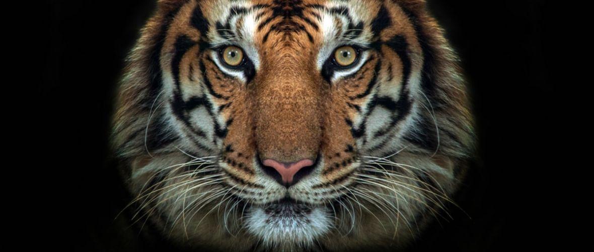 Poleciały głowy. Agencja odpowiedzialna za wpadkę Tigera straciła kontrakt