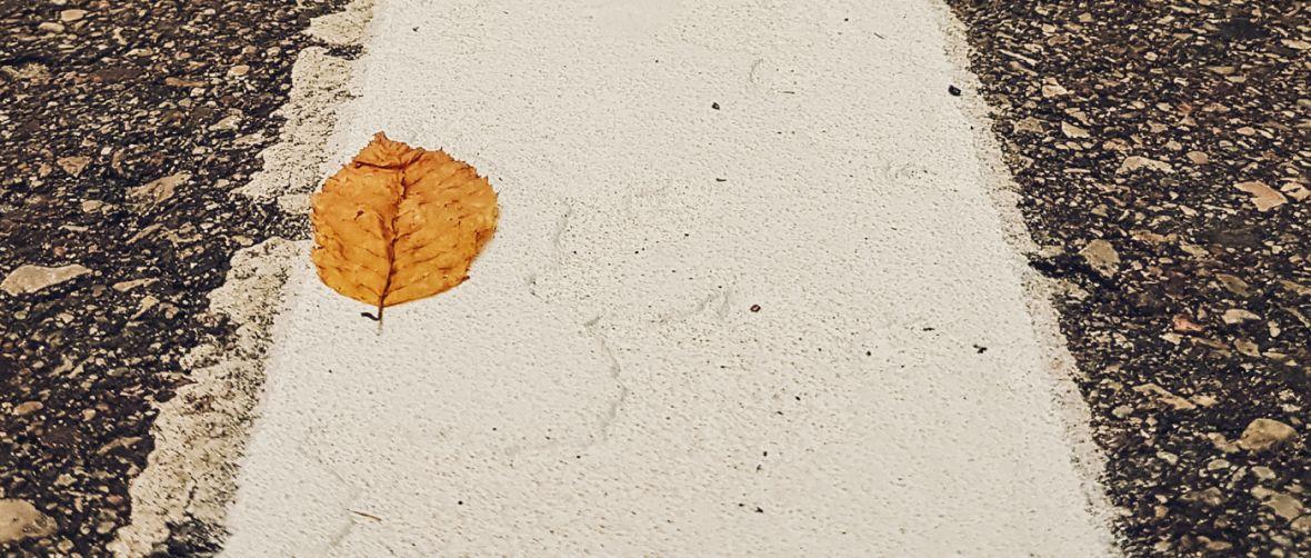 Autumn is coming – złapane smartfonem #150
