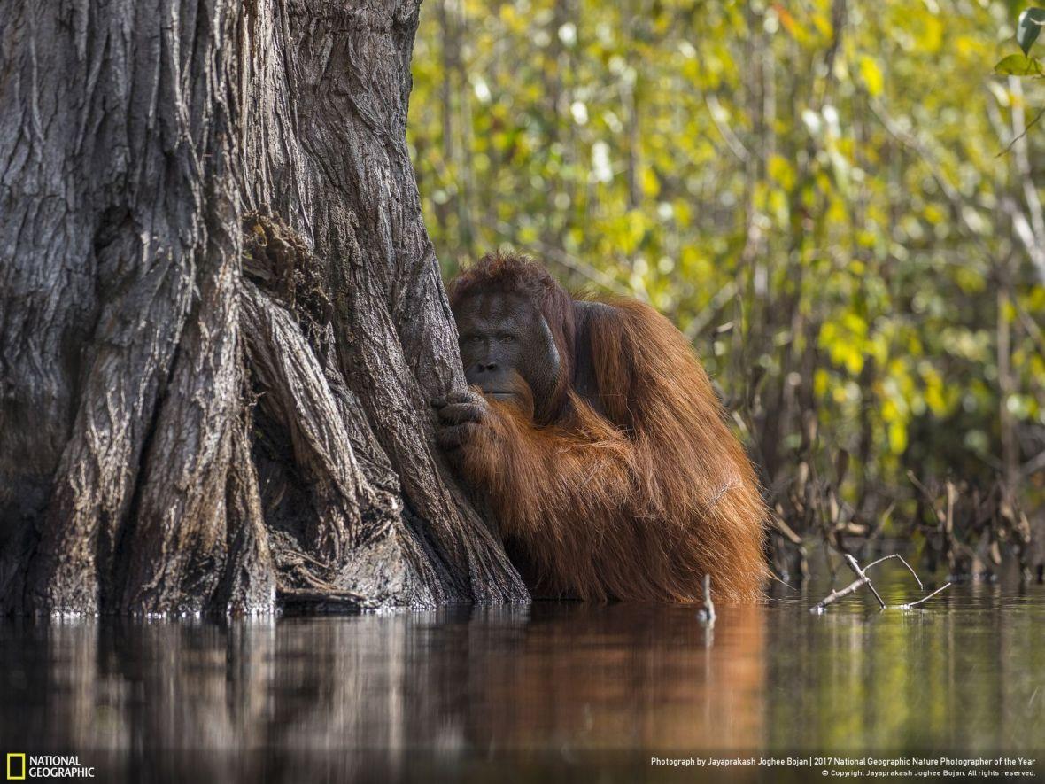 Zobacz najlepsze zdjęcia roku według National Geographic