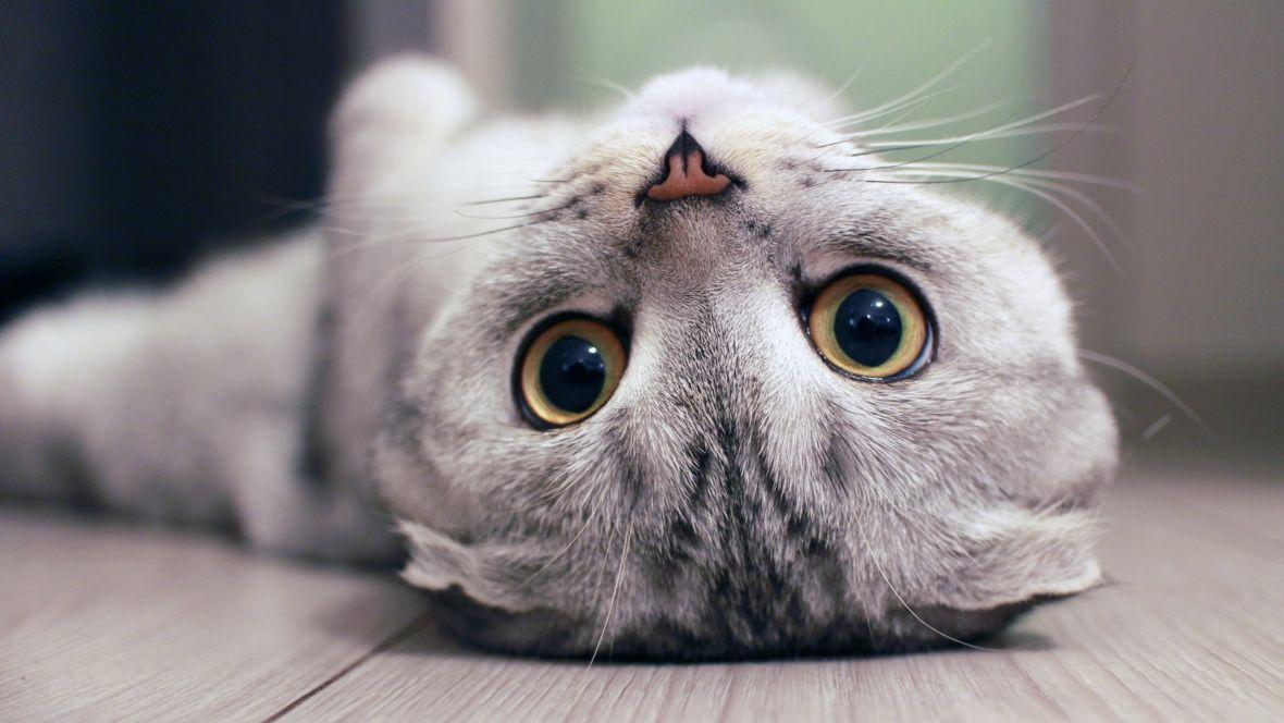 Twitter przestanie ucinać głowę twojemu kotu