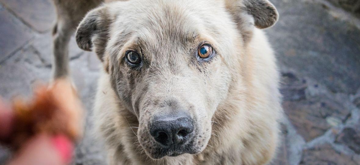 10 tysięcy psów i 23 miliony dolarów. Startuje największe badanie na temat starzenia się psów