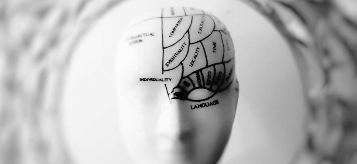 Naukowcom udało się ożywić mózg ssaka. Przed nami poważna dyskusja, co dalej