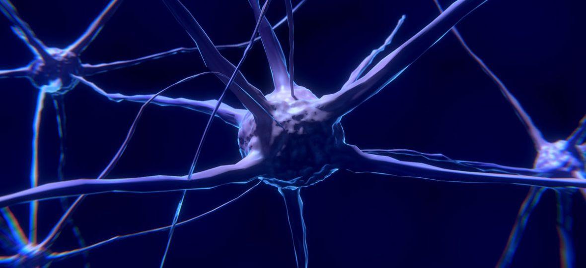 Jelitowy układ nerwowy, czyli do czego służy nasz drugi mózg?