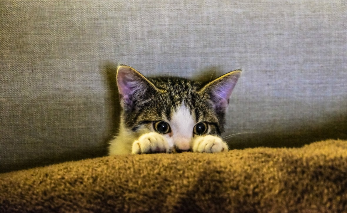 Hollywood i okolice manipulują dziećmi, by tworzyć kłamliwy obraz kotów