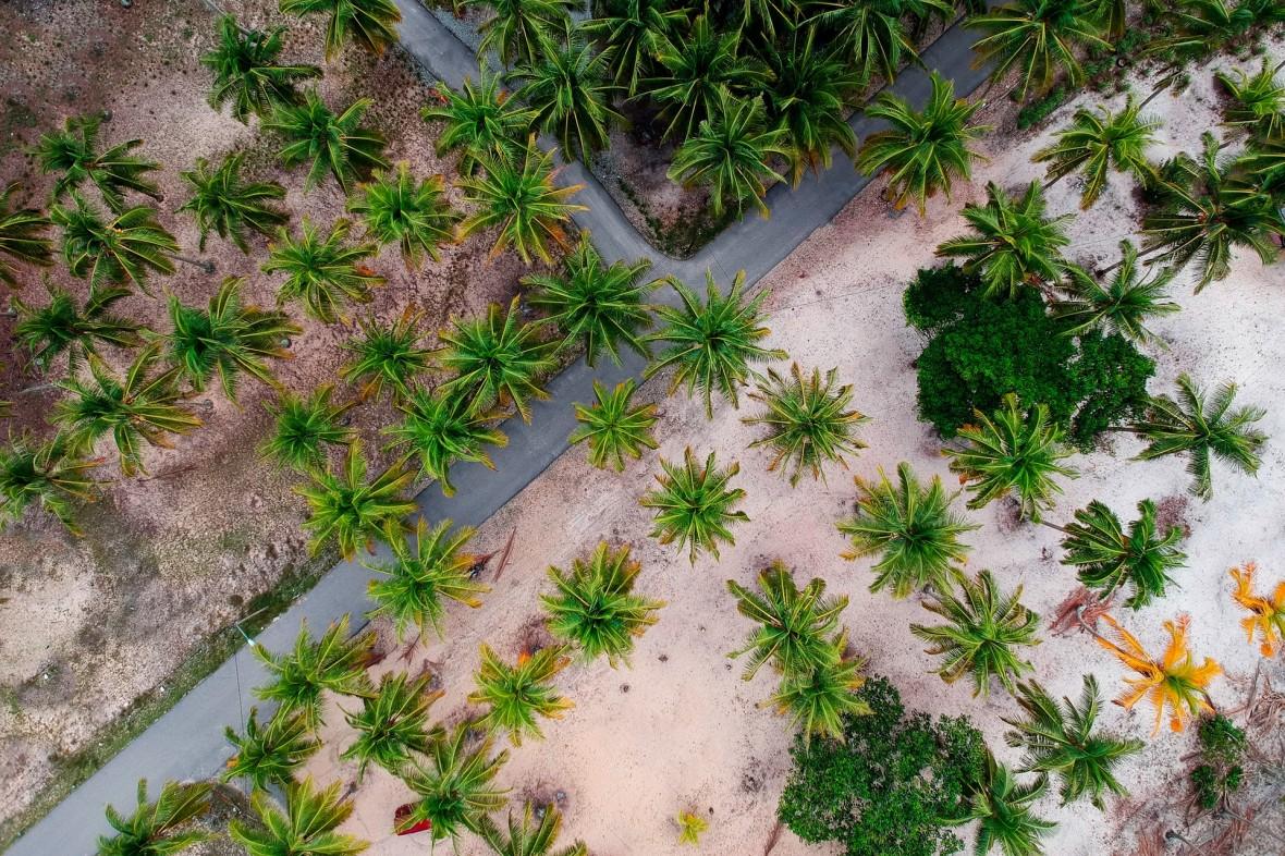 Czy powinniśmy unikać oleju palmowego? Polacy zrobili taką aferę, że producent Doritos zmieni w Polsce skład nachosów