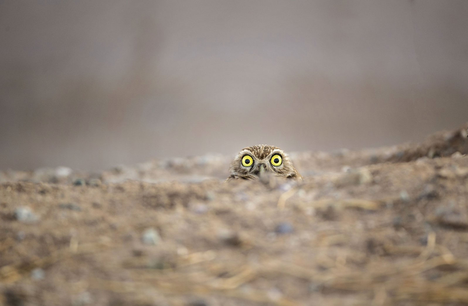 2018 Comedy Wildlife Photography Awards - wyniki