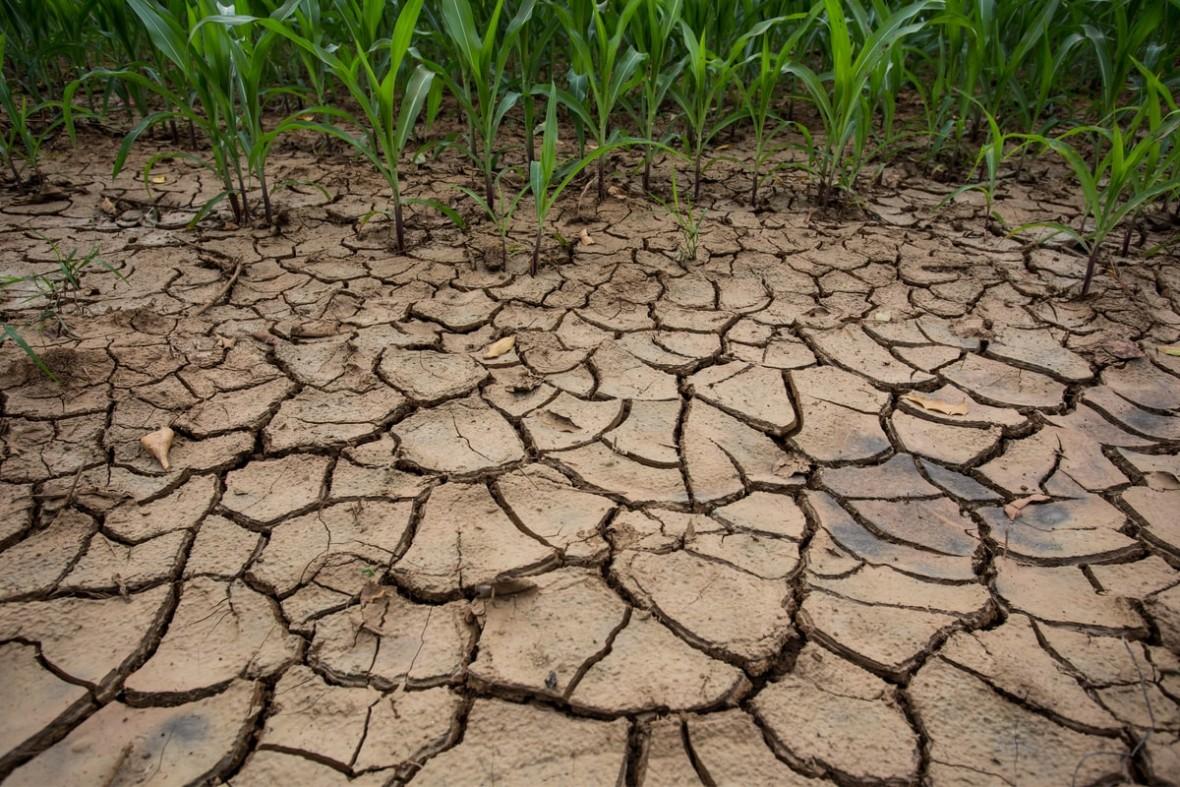 Globalne ocieplenie nie zwalnia. 2018 r. był czwartym najgorętszym rokiem z rzędu