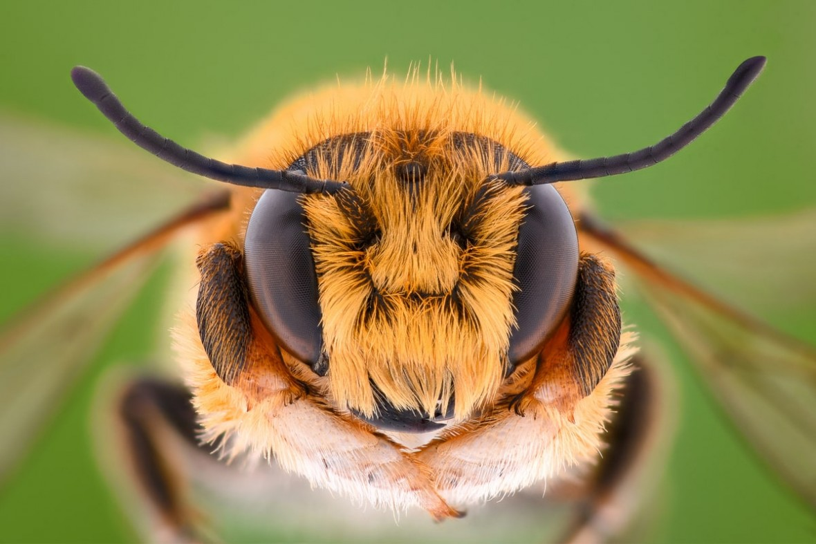 Inteligentne ule pomogą w walce z wymieraniem pszczół