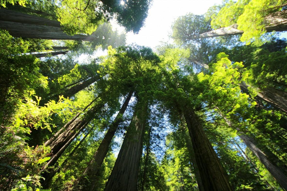 Najskuteczniejszy sposób na walkę z globalnym ociepleniem? Wystarczy posadzić bilion nowych drzew