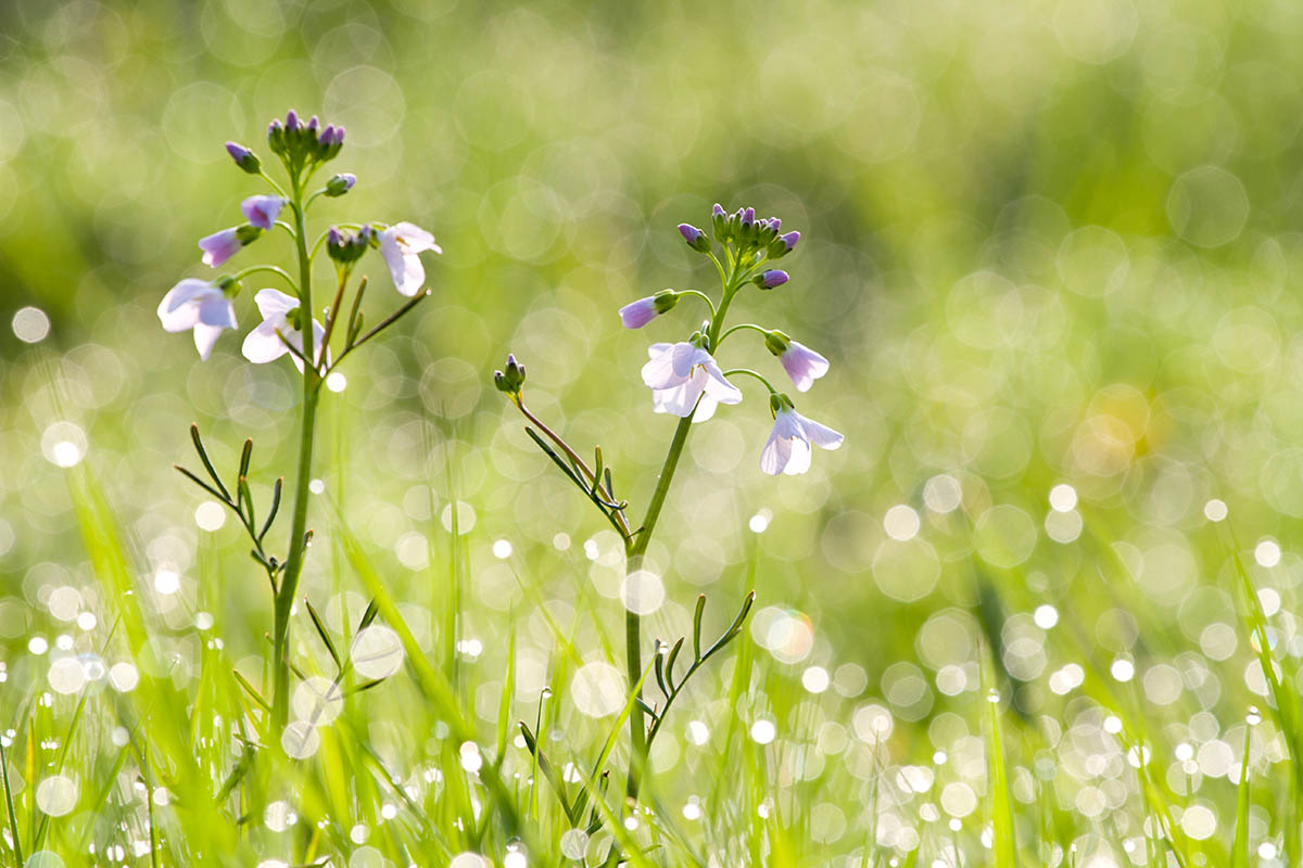 """Ladies of the Meadow"", fot. Jake Kneale 