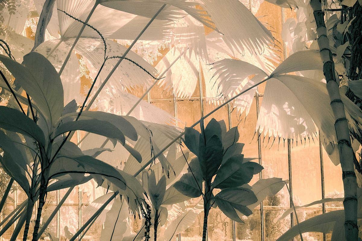 """Tropical Wonderland"", fot. Jocelyn Horsfall 