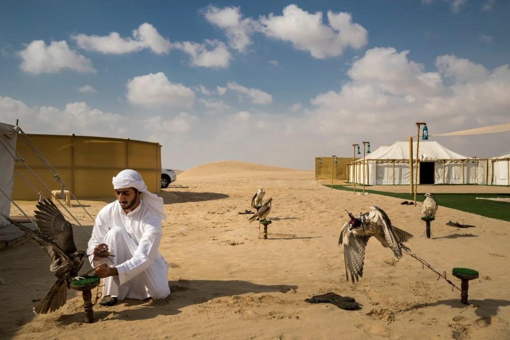Fot. Brent Stirton/Getty Images / National Geographic. I miejsce w kat. Natura, historia. Obóz polowania na sokoły na pustyni nieopodal Abu Dhabi.