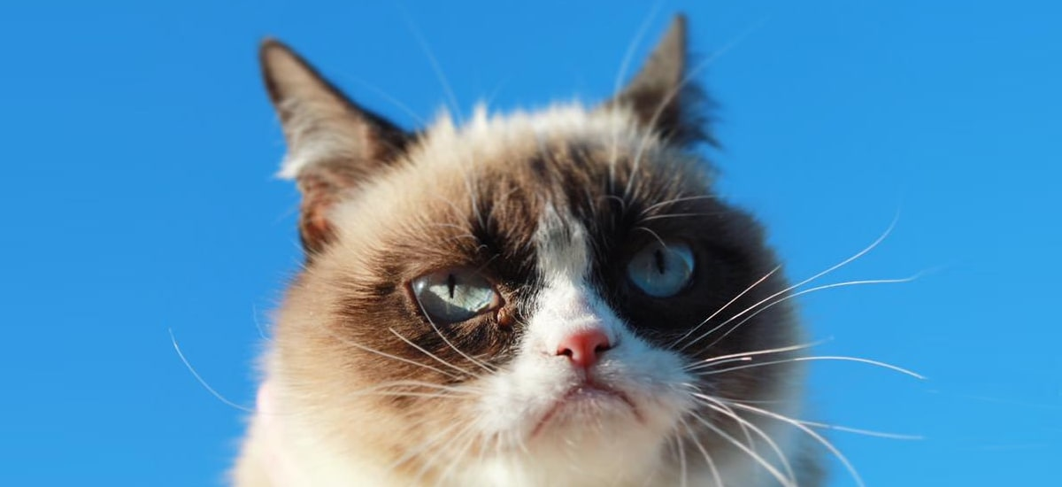 He died one of the largest phenomena of the Internet. Grumpy Cat is dead