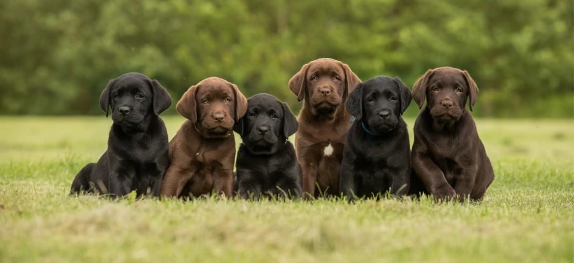 Ile kosztuje sklonowanie psa? Wszystko, co musisz wiedzieć o klonowaniu zwierząt domowych