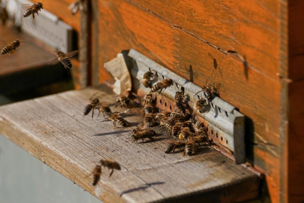 mcdonalds-mchive-pszczoly-w-miescie