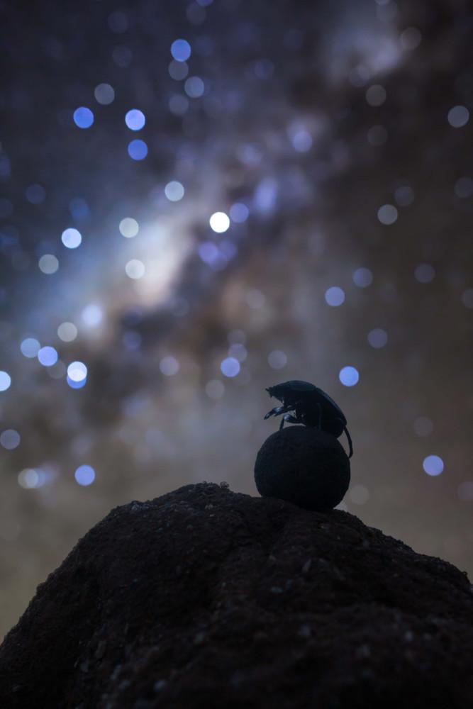 """Fot. Robin Stuart, """"Celestial Navigator"""""""
