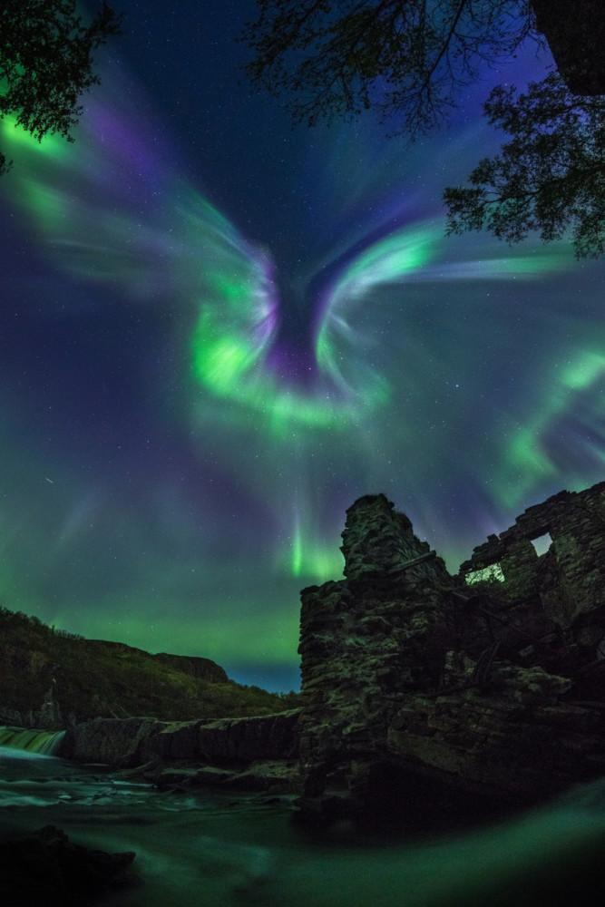 """Fot. Alexander Stepanenko, """"Aurora is a Bird"""""""