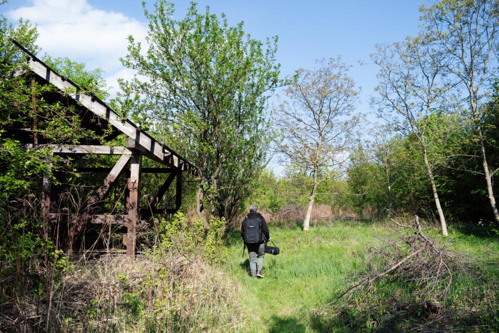 W drodze na łąkę. Fot. Krzysztof Basel