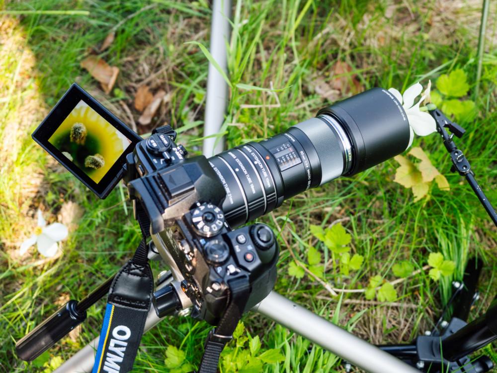 Olympus OM-D E-M1 Mark II, M.Zuiko 60mm f/2.8 i pierścienie pośrednie. Fot. Krzysztof Basel