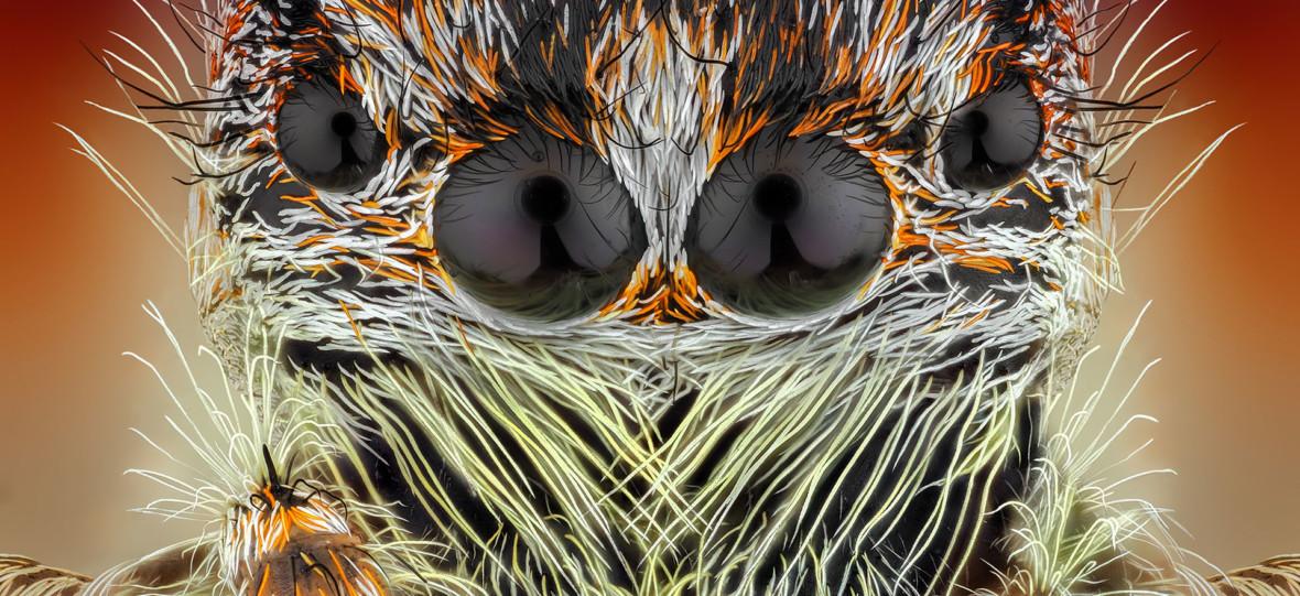 Oko w oko z pająkami, kleszczami i muchami. Poznałem sekrety fotografii makro